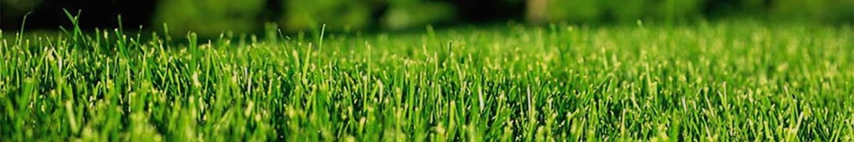 Perfect Green Grass for Commercial Lawn Service Sitemap