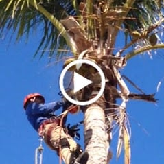 Broedell Commercial Tree Services